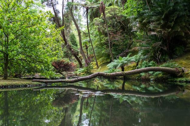 ワシントン州シアトルのマウントレーニア国立公園の湖に映る倒木