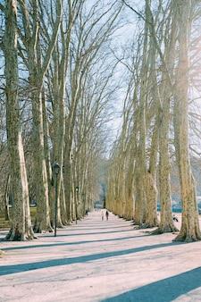 昼間に裸の木々に囲まれた経路に沿って歩く人々のグループ