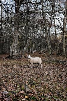 秋の紅葉が地面に散在している森の真ん中に羊の垂直ショット