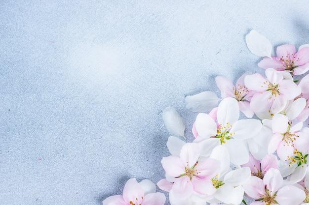 Красивые цветы яблони на синем фоне