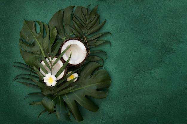 熱帯の緑の葉ヤシ、花、ココナッツの半分