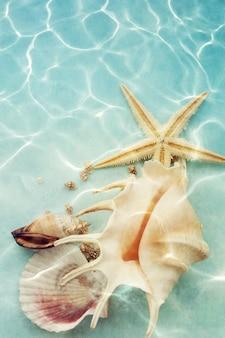 水の中の貝殻