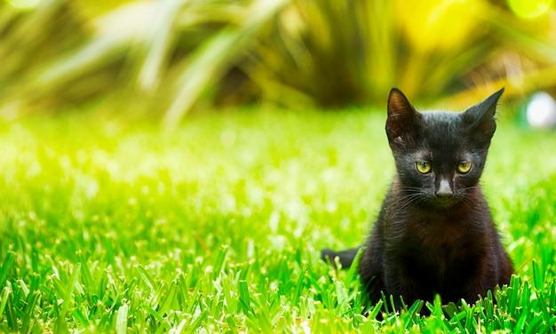 Маленький черный котенок в летнем саду