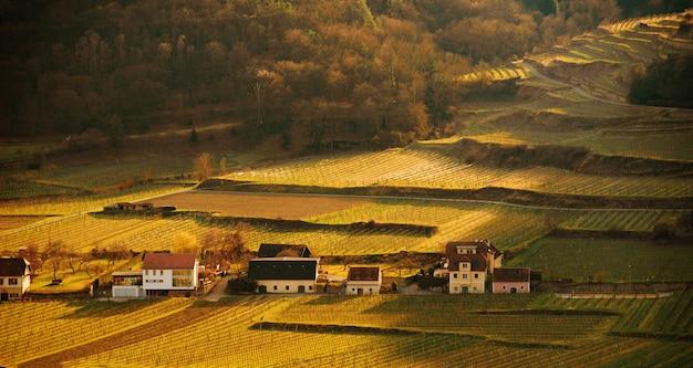 オーストリアのブドウ栽培、農場の夕暮れ時の美しい風景の肖像画