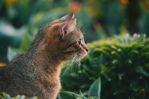 Фото красивого милого кота в саде, славной игры киски напольной на заходе солнца.