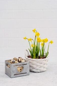 レンガの壁に新鮮な水仙の花が付いている木製のバスケットのウズラの鳥の卵。
