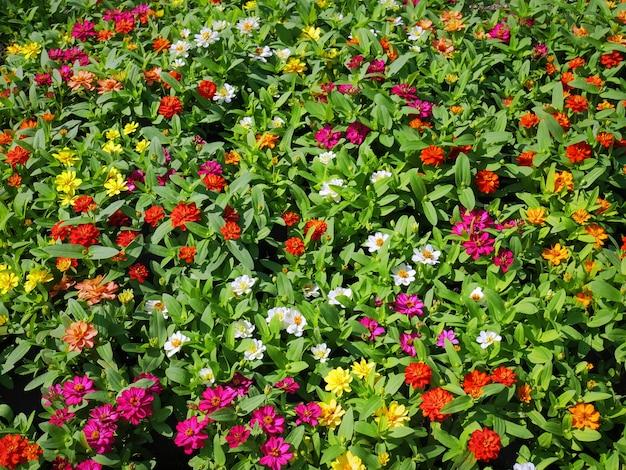 色とりどりの花のフィールドのフルフレームの背景