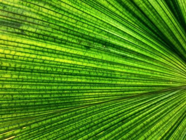 緑のヤシの葉のテクスチャのフルフレームの背景