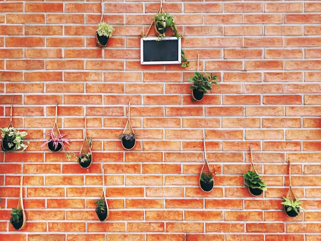 Различные виды растений в подвесных корзинах на фоне кирпичной стены