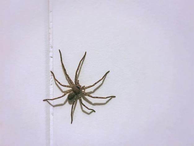 タイル張りの壁に小さなクモのクローズアップ