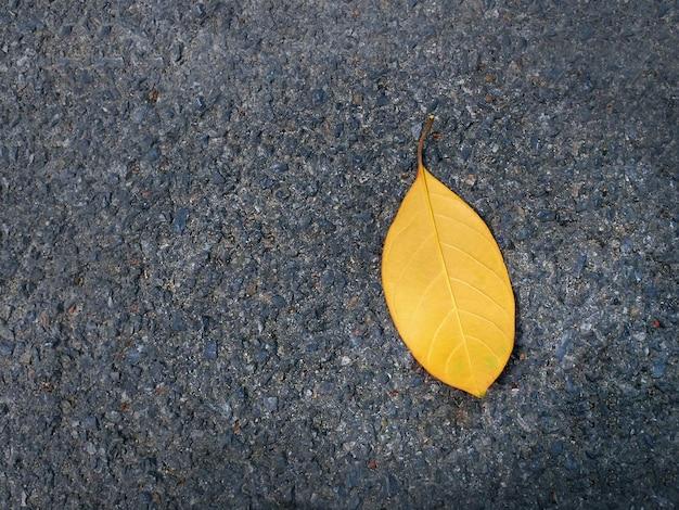 アスファルト道路上のクローズアップの単一の乾燥葉