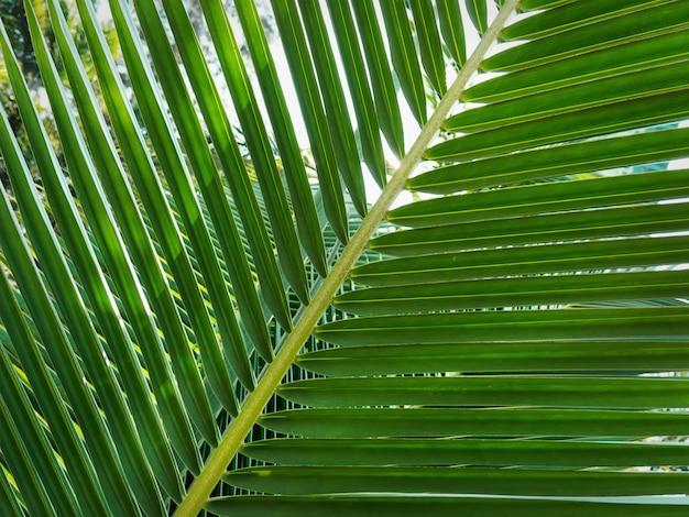 Крупным планом свежие зеленые пальмовые листья в саду