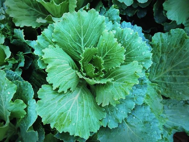 Полный кадр фона свежих зеленых овощей с каплями дождя на листьях