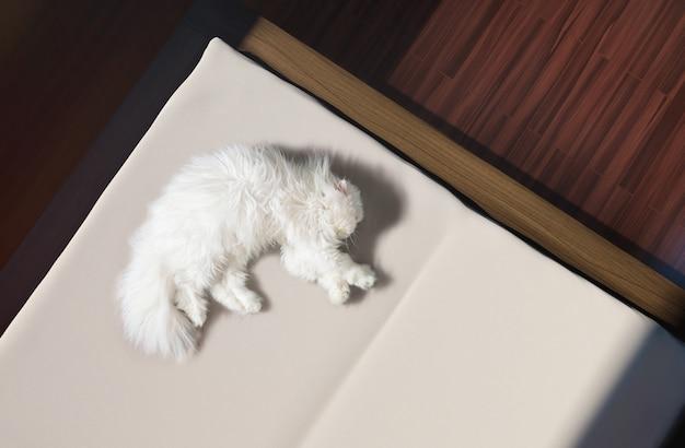 白いふわふわの猫がベッドで寝ています。日光。
