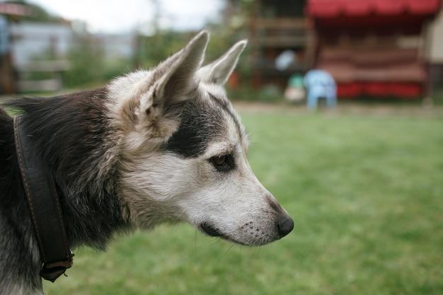 犬の横顔の肖像画を閉じる