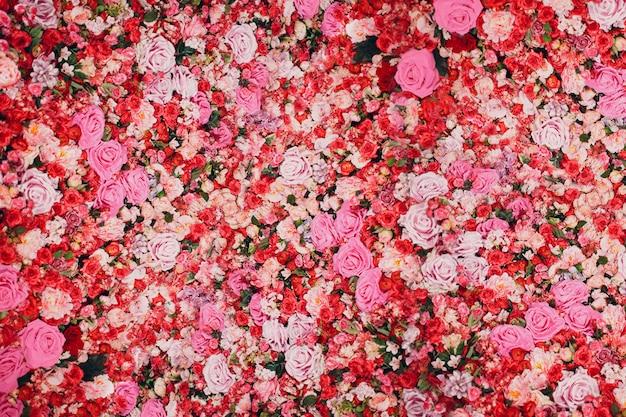 Стена из красных и розовых роз. много цветов.