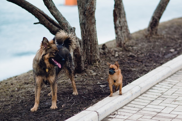 動物、犬、楽しい、笑い、銃口、ペットショップ、子犬、安全性、セキュリティ、