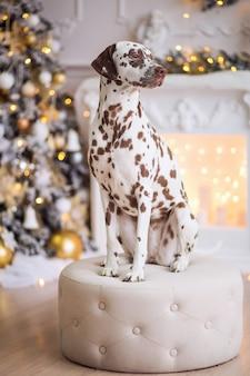 おかしいクリスマスまたは新しい年の犬。子犬は座っているダルメシアン犬です
