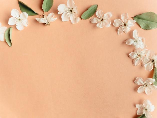 Рамка с вишневыми цветами, предпосылка цветка весны, взгляд сверху, плоское положение, рамка, космос экземпляра.