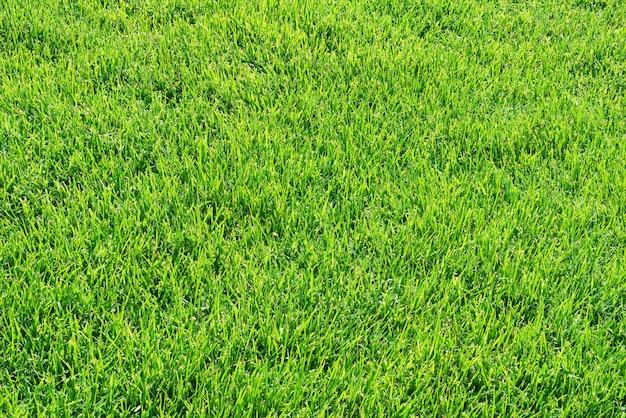 緑の芝生の芝生またはフィールドの背景