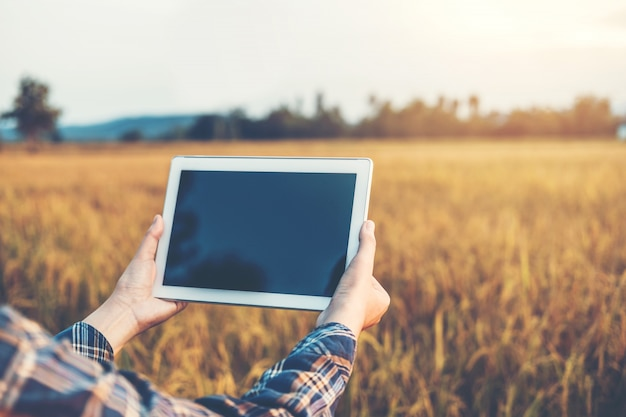 スマート農業農業技術と有機農業研究用タブレットを使用し、水田における水稲品種の開発を研究する女性