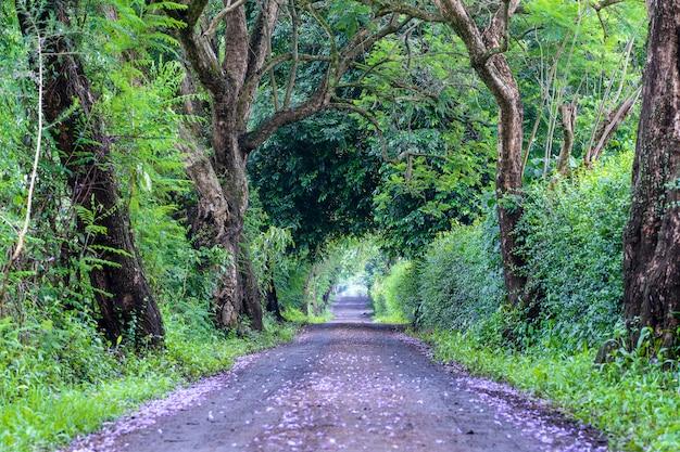 木のトンネル道のような大きな緑の木々の横の道の長い道