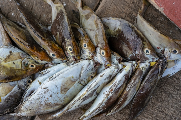 Рыбы моря свежие на уличном продовольственном рынке острова занзибар, танзании, африки. концепция морепродуктов. сырая рыба для приготовления пищи, крупным планом