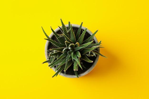 黄色の表面に鍋に多肉植物