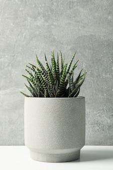 灰色の表面に鍋に多肉植物