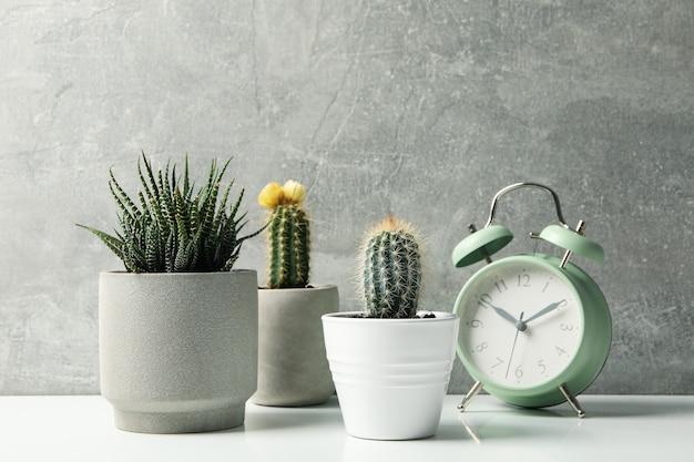Сочные растения в горшках на фоне серой поверхности. комнатные растения