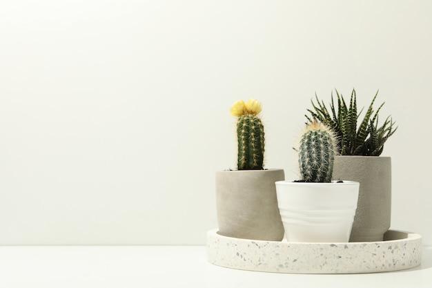 白い表面に多肉植物の大理石のトレイ。観葉植物