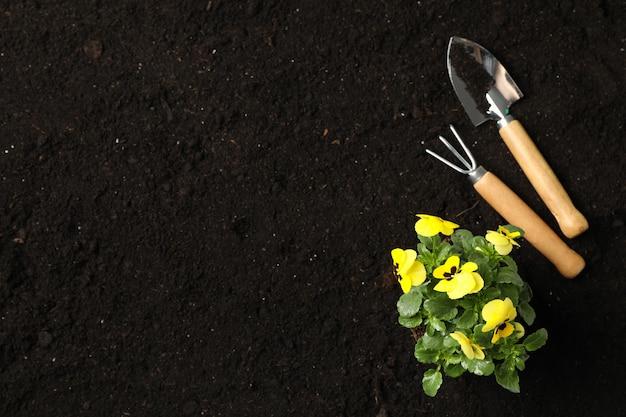 ガーデニングツールと土壌の背景、テキスト用のスペースのパンジー