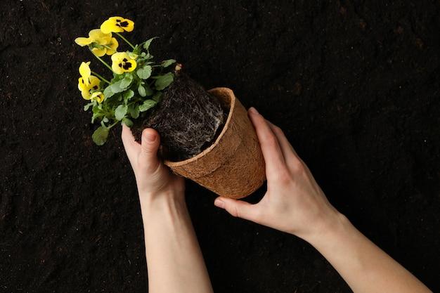 女性は土の背景、上面に花とポットを保持します。
