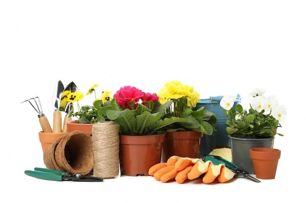 サクラソウ、パンジー、白で隔離される園芸工具