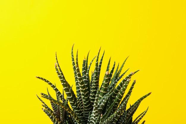 黄色の背景に多肉植物をクローズアップ