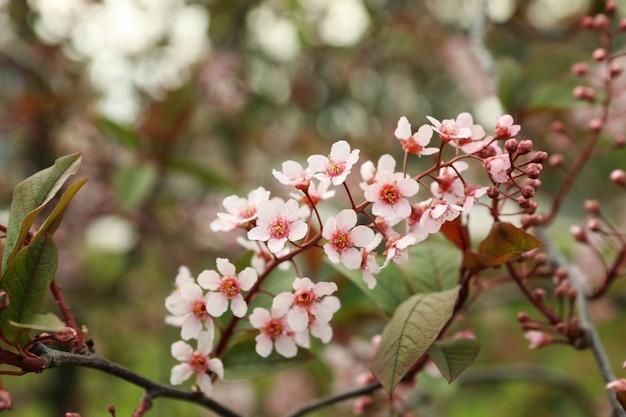 春に咲く庭、咲く春の木