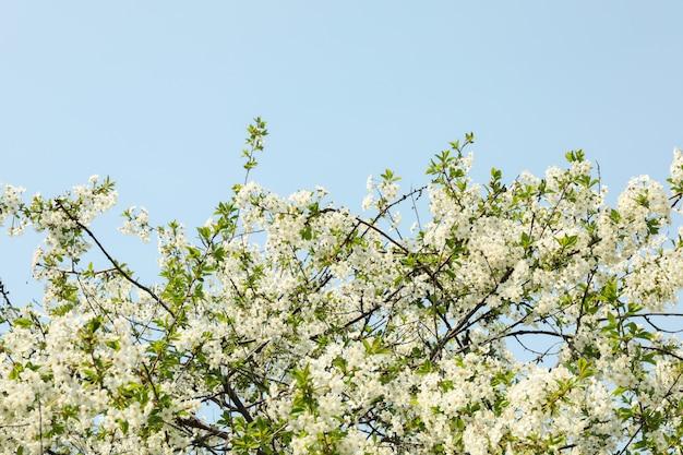 春に咲く庭、咲く春の木。晴れた春の日