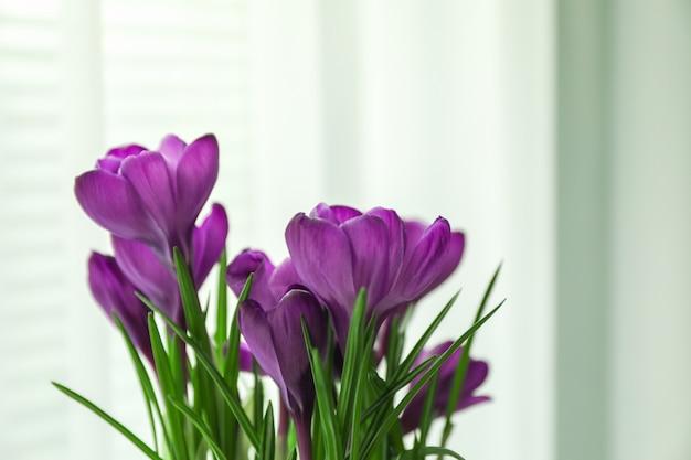 Красивый весенний крокус на светлом фоне, место для текста
