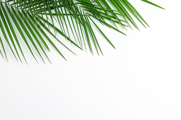白い背景、上面図、テキスト用のスペースに美しいヤシの葉。エキゾチックな植物