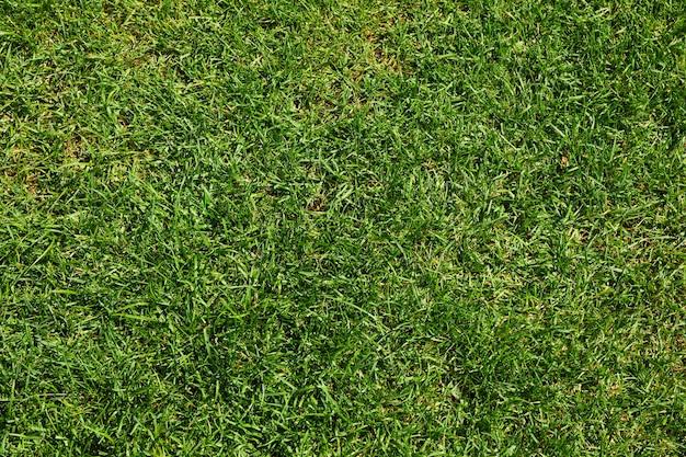 新鮮な緑の草のテクスチャです。自然な背景、テキスト用のスペース
