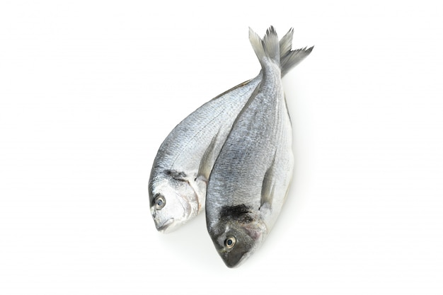 白で隔離される新鮮なドラド魚