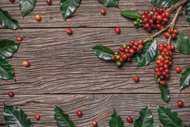 Закройте вверх по свежим органическим красным кофейным зернам с листьями кофе на деревянной предпосылке с космосом экземпляра