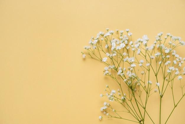 Букет из свежих белых гипсофила на желтом фоне.