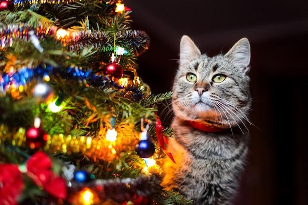 クリスマスツリーの近くの美しい猫