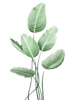 水彩イラスト。植物のクリップアート