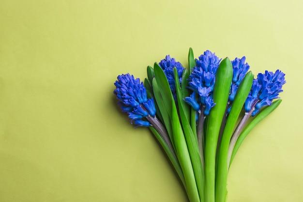 黄色の背景に青いヒヤシンスの花束