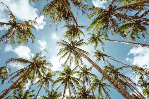 フィリピンのヤシの木のジャングル。放浪癖熱帯旅行についての概念
