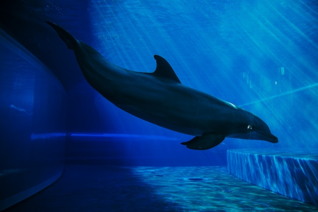 Дельфины плавают под водой