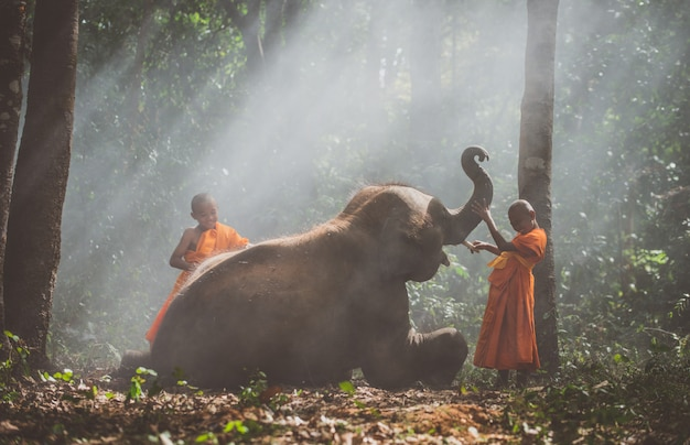 象の赤ちゃんと一緒にジャングルを歩くタイの僧侶