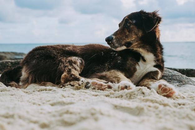 Животные в отпуске. собака спит и отдыхает на белом песке тропического острова